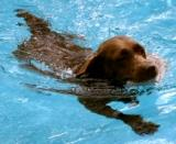 Dogs Swimming Tips