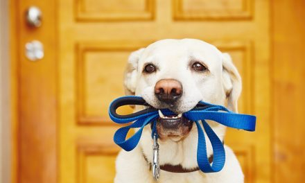 Eight Reasons Why Exercise is Good for Your Dog's Mind