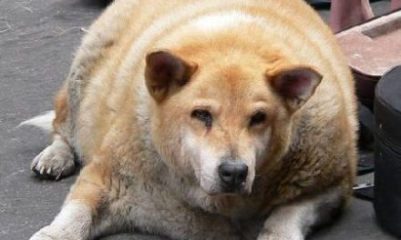 Five Important Things to Know To Help Your Dog Lose Weight