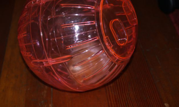 Can I Let My Degu Play in a Hamster Ball?