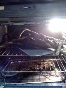 Baking a Branch in the Oven