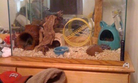 Degu Cage Cleaning Tips
