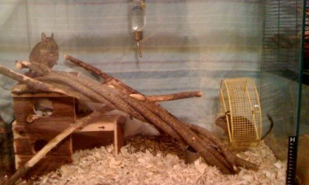 100% Edible Chew Log for Degus, great for play and eating!