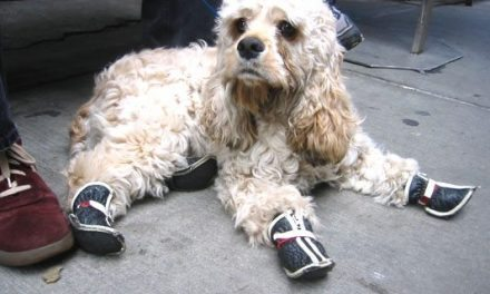 Dog Shoes With Sole