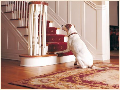 Great Indoor Exercises For Your Dog