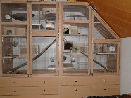 Easy Affordable Homes For Small Animals
