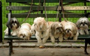 Tips For Taking Your Dog To A Dog Park