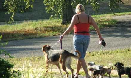 Dog People Get More Exercise