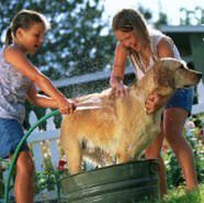 Keep your dog cool by getting her wet