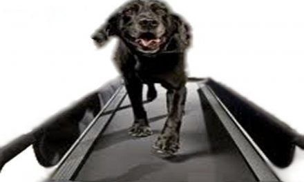 Dog Treadmills – Basic Facts