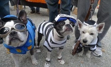 Dog Halloween Costume Safety