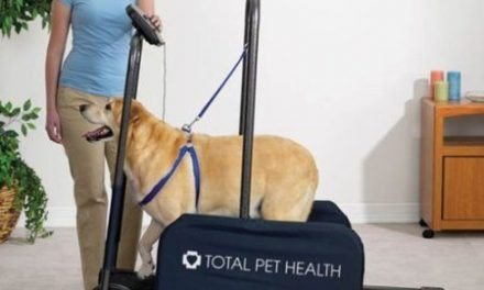 Finding The Right Dog Treadmill For You