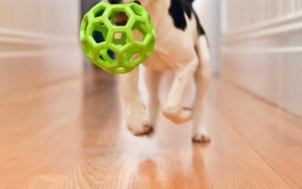 The Art of Fetch