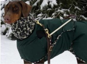 Winter Coat for Dog