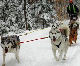 Dog Mushing – Winter Sports for Dogs