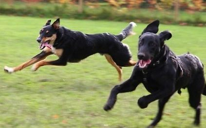 Dogs Playing Together…or Are They?