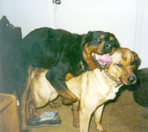 Dogs Mating