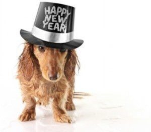 8 Pet Behavior New Year's Resolutions
