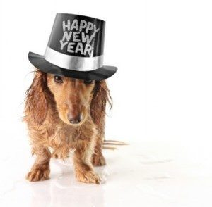 New Years Dog