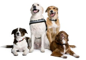 Solving Dog Behavior Problems with Multiple Canines