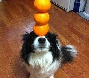 Can Dogs Have Oranges?