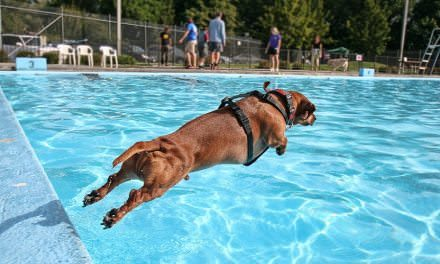 Can All Dogs Swim?
