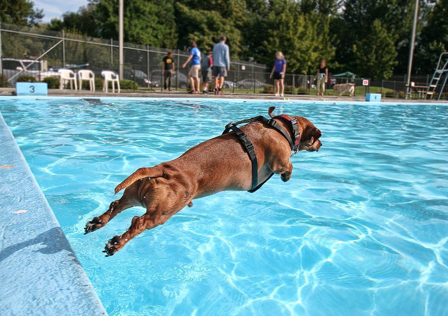 Can Dogs Swim In Lakes