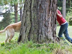 Dog Hide and Seek for Newbies | Animal Hub