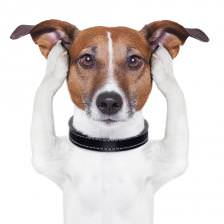 Training a Dog When Stressed