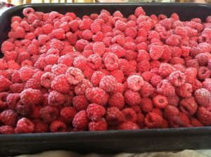 Can Dogs Eat Raspberries?