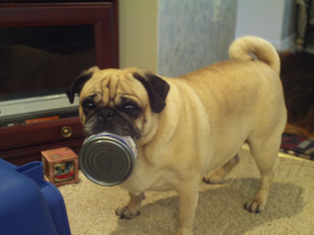 Can dogs eat tuna fish for Is tuna fish good for dogs