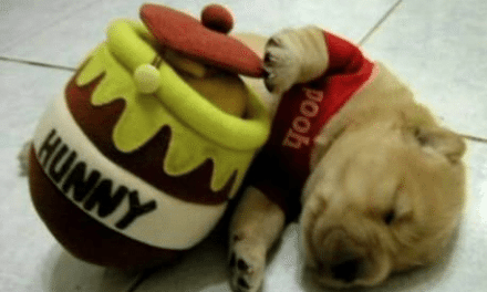 Image result for dogs and honey