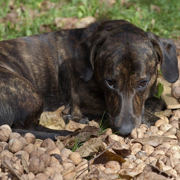 Are Cashews Safe For Dogs To Eat