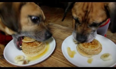 Can Dogs Eat Pancakes?