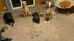 The Leave It Dog Command