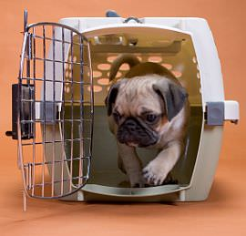 Step By Step Puppy Crate Training