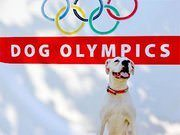 Pets Are Athletes, Too: The Case for Dog Competitions at the Olympics