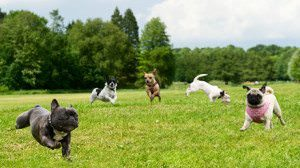 Are Dog Parks Good for Every Dog?