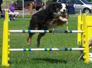 NFL Football Fun: Dog Sports That Require Football-Related Skills