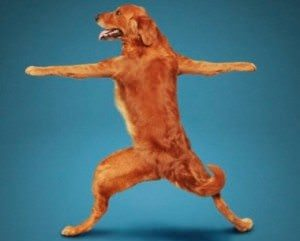 Doga: Why Humans Should Practice Yoga with Dogs