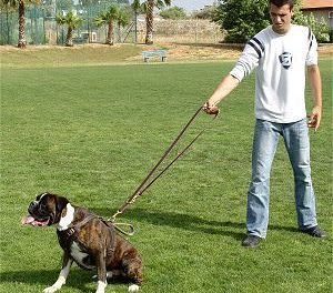 Training: Dog Leash Manners