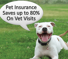 Facts and Tips About Choosing Pet Insurance for Older Dogs