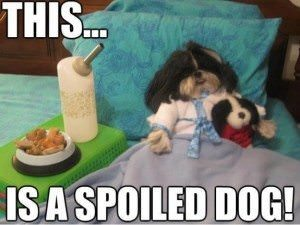 Spoiled Dog