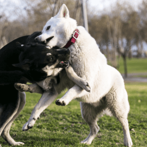 Safely Break Up A Dog Fight