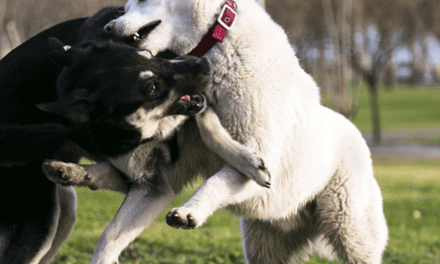 Properly Breaking Up a Dog Fight