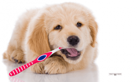 The Right Way to Brush Dog's Teeth