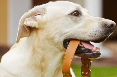 High-Quality Dog Collars And Harnesses