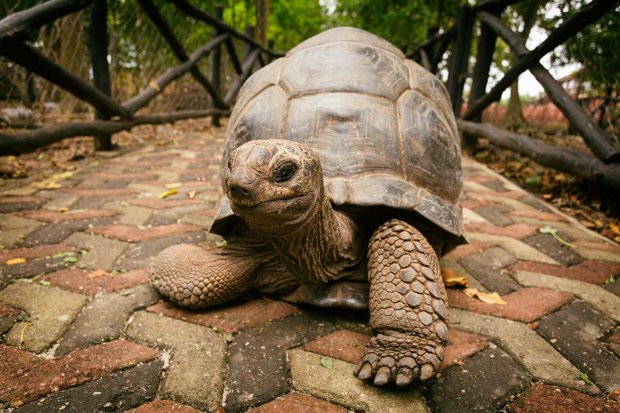 choosing a turtle vs a tortoise a simple guide