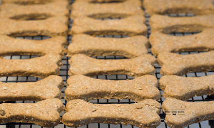 Ready For Easy Homemade Dog Treats?
