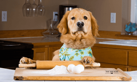 Homemade Dog Treats: Everything You Should Know